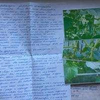 Огурец Сибирская гирлянда f1: отзывы, фото, описание сорта