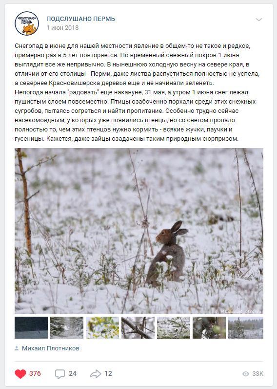 Клубника Женева: описание сорта, фото, отзывы