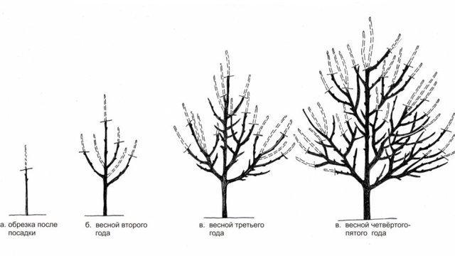 Яблоня Айдаред: описание сорта, фото, отзывы, посадка
