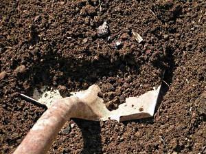 Помидоры раннеспелых сортов для открытого грунта