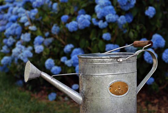 Метельчатая гортензия Ванилла Фрейз (vanille fraise): фото, описание, посадка и уход, подготовка к зиме