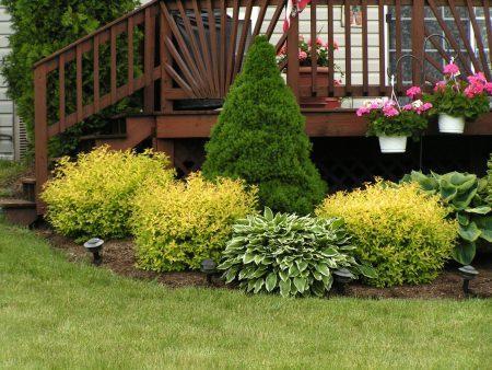Многолетние кустарники для огорода