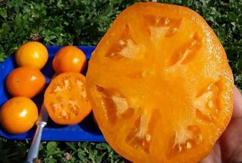 Томат Алтайский оранжевый: отзывы, характеристика и описание, фото