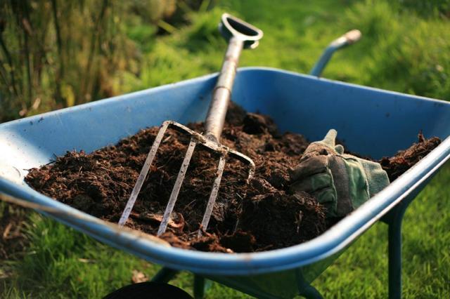 Огурец Апрельский: характеристика, выращивание, отзывы, фото