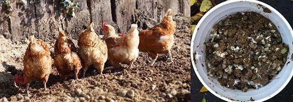 Чем подкормить смородину осенью: удобрение после сбора урожая