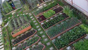 Чем подкормить виноград осенью: органические и минеральные удобрения