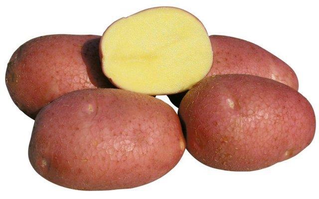 Картофель Красавчик: описание сорта, фото и отзывы