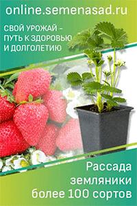 Эшшольция: выращивание из семян, когда сажать на рассаду, фото и видео
