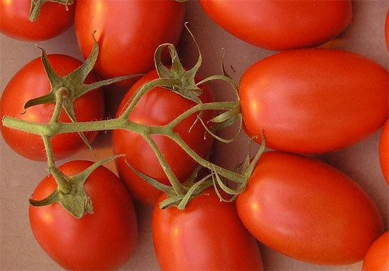 Томат Ромовая баба: отзывы, описание, урожайность, фото