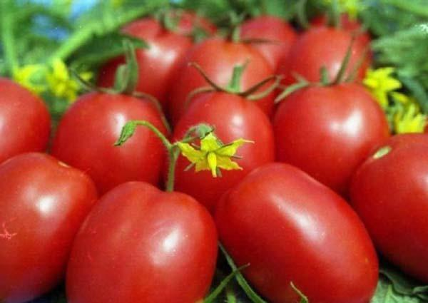 Томат Паленка: отзывы, фото, урожайность