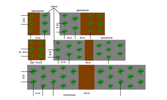 Способы выращивания клубники