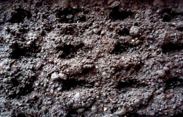 Как вырастить лук-батун из семян: когда и как сажать