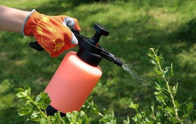 Паутинный клещ на смородине: фото, как избавиться, народные средства борьбы, химические препараты, советы