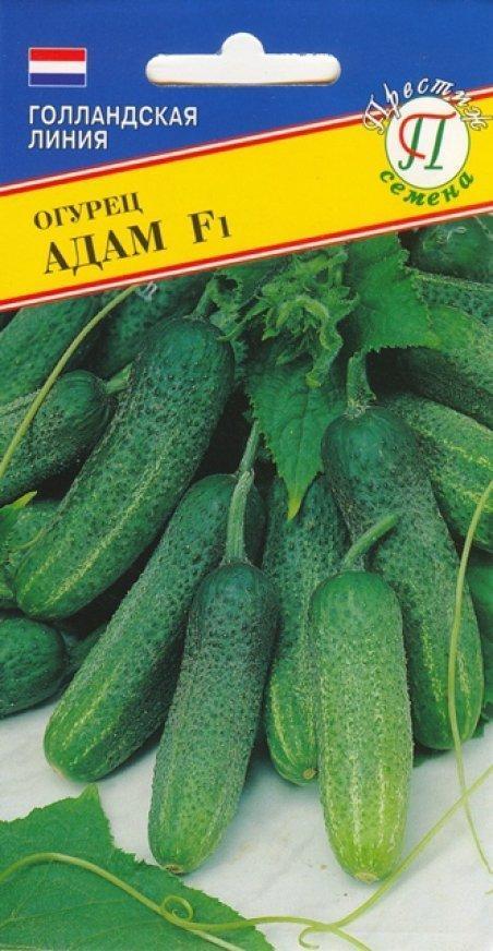 Огурец Адам f1: отзывы, фото, описание