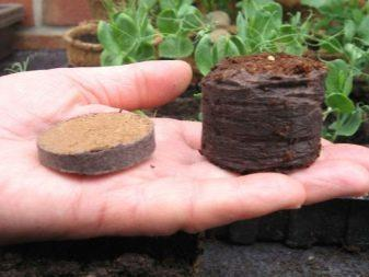 Посадка петунии в торфяные таблетки