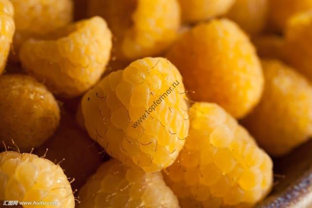 Малина желтая ремонтантная: сорта, фото, отзывы.