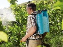 Виноград Молдова: описание сорта, фото, отзывы