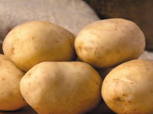 Картофель Бриз: характеристика сорта, фото, отзывы