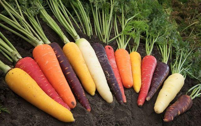 Как правильно хранить морковь в домашних условиях на зиму