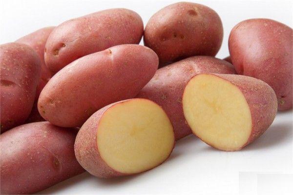 Картофель Ред Скарлет: описание сорта, фото, отзывы