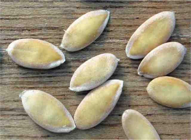 Дыня вьетнамская (молочная) Подарок дедушки Хошимина (Хо Ши Мина): отзывы, описание и характеристики сорта, как вырастить