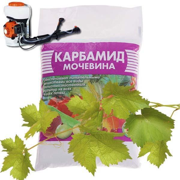 Обрабатываем виноград осенью: обзор средств, правила обработки перед укрытием