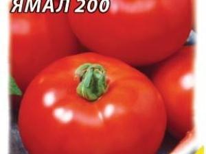 Томат Ямал 200: характеристика и описание сорта