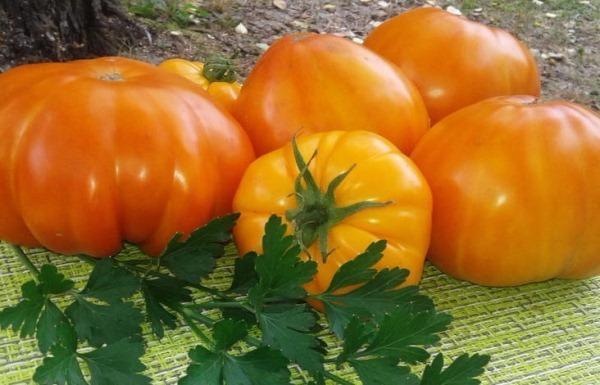 Томаты для теплиц крупноплодных сортов