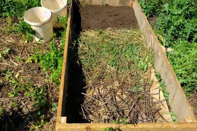 Посадка зимнего (озимого) чеснока осенью под зиму: подготовка почвы, удобрения