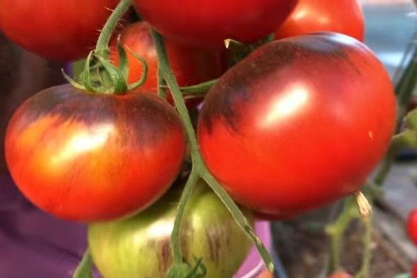 Черные помидоры: лучшие сорта томатов с фото и описанием