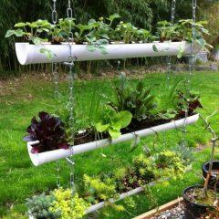 Выращивание клубники в трубах ПВХ вертикально: описание