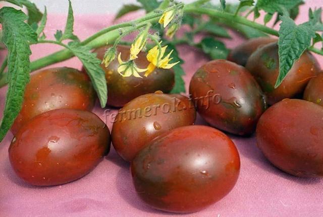 Томат Черный шоколад: характеристика и описание сорта, отзывы о помидорах
