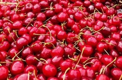 Черешня Одринка: описание сорта, морозостойкость, опылители, фото, отзывы