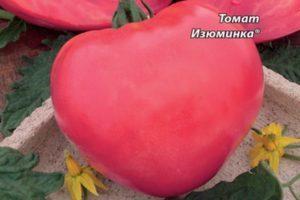 Томат Янтарный: описание сорта, характеристика, отзывы, фото