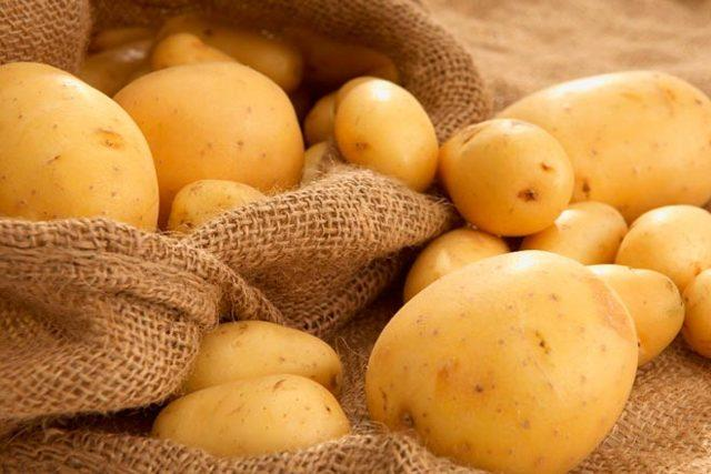 Лучшие голландские сорта картофеля + фото