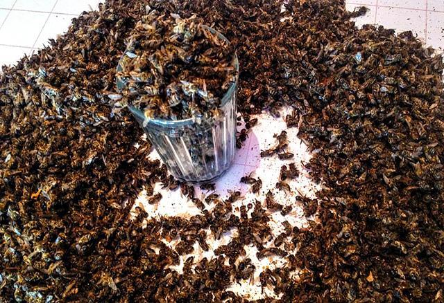 Подмор пчелиный для суставов: лечение, рецепты настойки от артрита