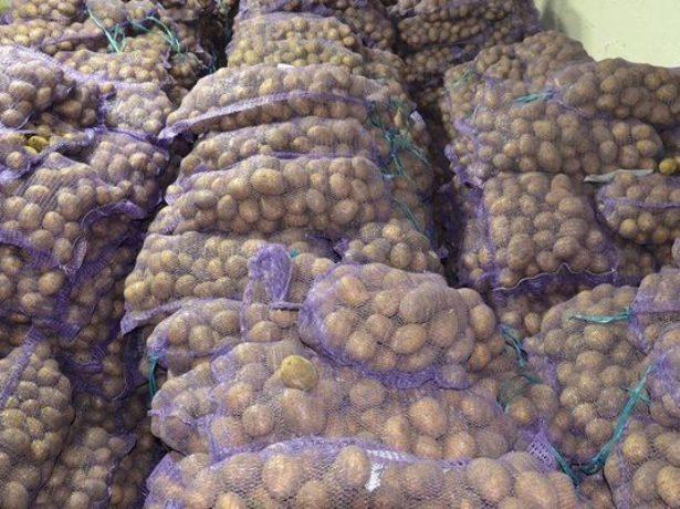 Картофель Венета: описание сорта, фото, отзывы
