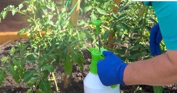 Удобряем томаты борной кислотой