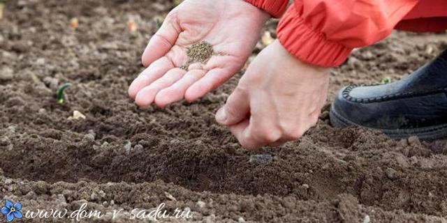 Как посеять морковь, чтобы затем не прореживать
