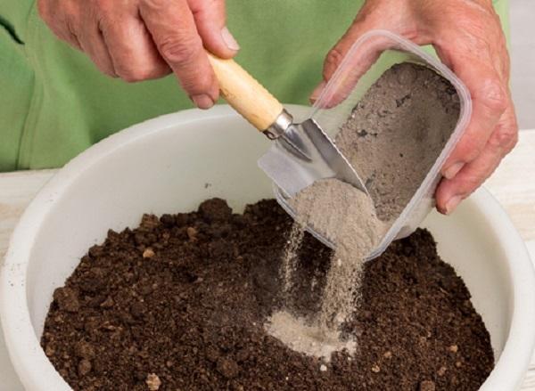 Срок посадки баклажанов на рассаду