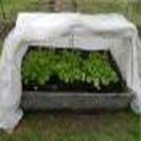 Закаливание рассады томатов