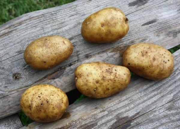 Картофель Маделина (Маделине): описание сорта, фото, отзывы