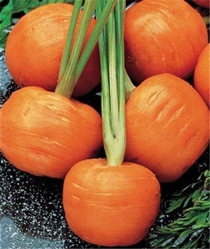 Морковь с округлыми плодами
