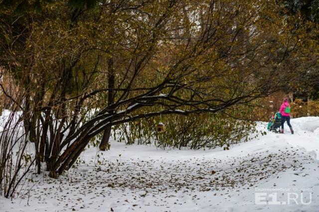 Яблоня не сбросила листья на зиму: что делать