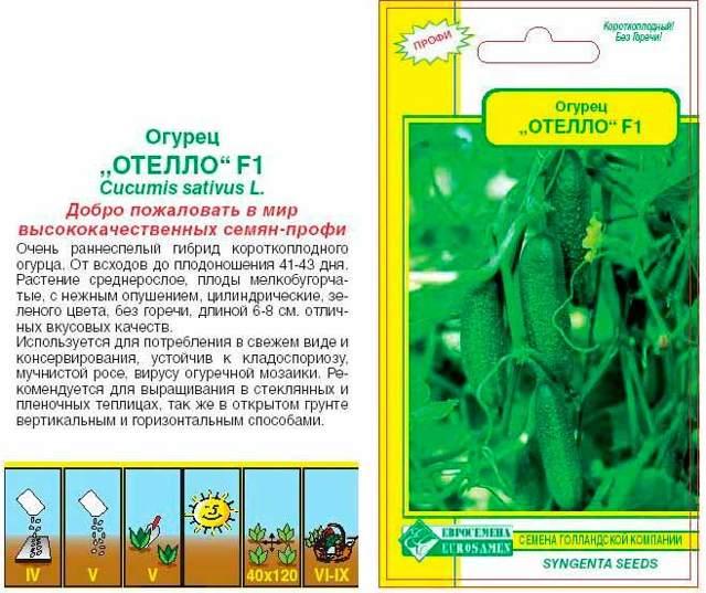 Огурец Отелло f1: характеристика и описание сорта, отзывы, фото