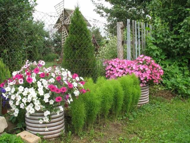 Уход в домашних условиях за рассадой петунии