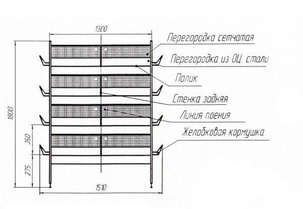 Клетка для перепелов своими руками: пошаговая инструкция