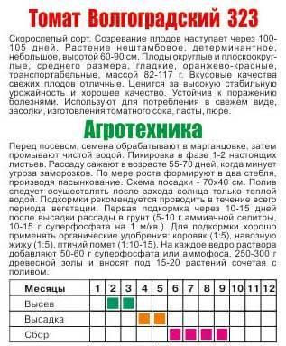 Томат Волгоградский 5/95: характеристика и описание, отзывы, фото