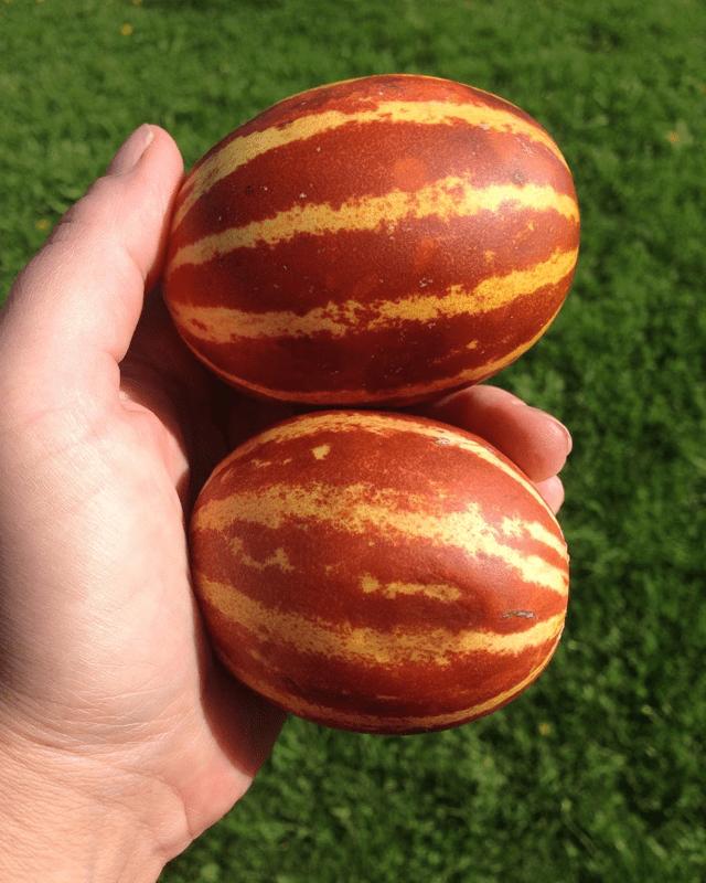 Ананасовая (ананасная, Ананас f1, Американский ананас) дыня: сорта, выращивание и уход