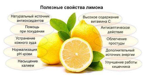Как хранить лимоны в домашних условиях: в холодильнике, морозилке, при комнатной температуре